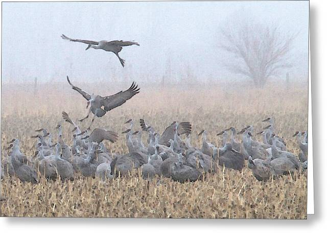 Misty Morning Nebraska Landing Greeting Card