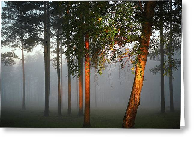 Misty Morning Greeting Card by Vladimir Kholostykh