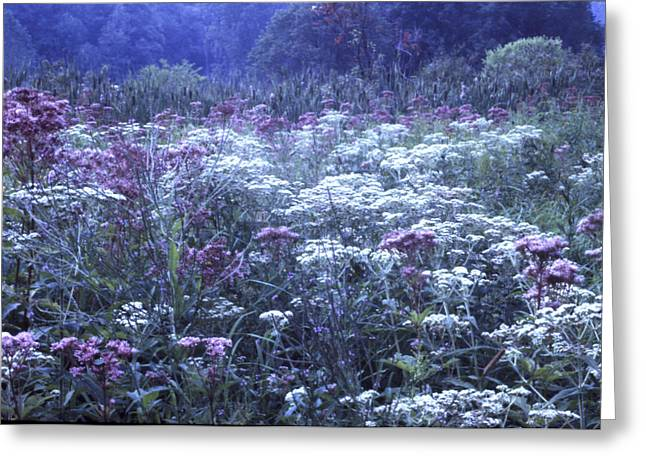 Misty Morning Wildflowers 3 Greeting Card