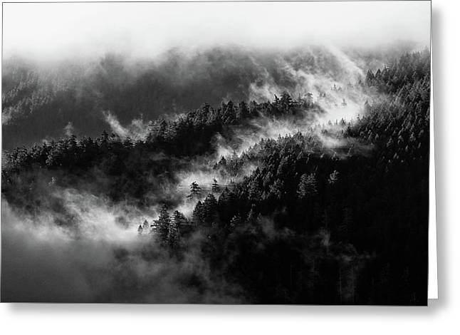 Greeting Card featuring the photograph Misty Mountain Pines by Michael Hope