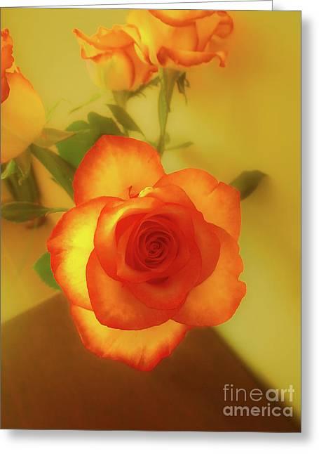 Misty Orange Rose Greeting Card