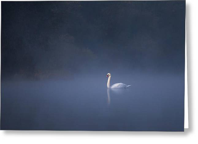Misty River Swan Greeting Card