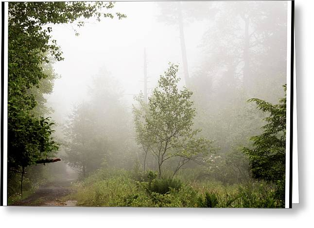 Misty Road At Forest Edge, Pocono Mountains, Pennsylvania Greeting Card