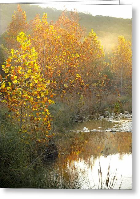 Misty Sunrise At Lost Maples State Park Greeting Card by Debbie Karnes