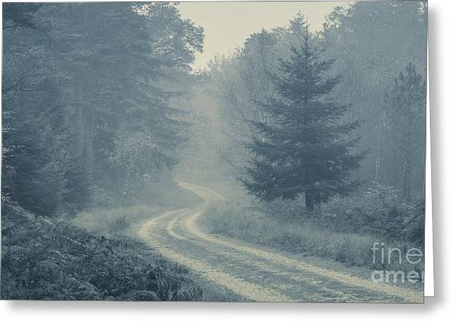 Misty Track New Forest Greeting Card