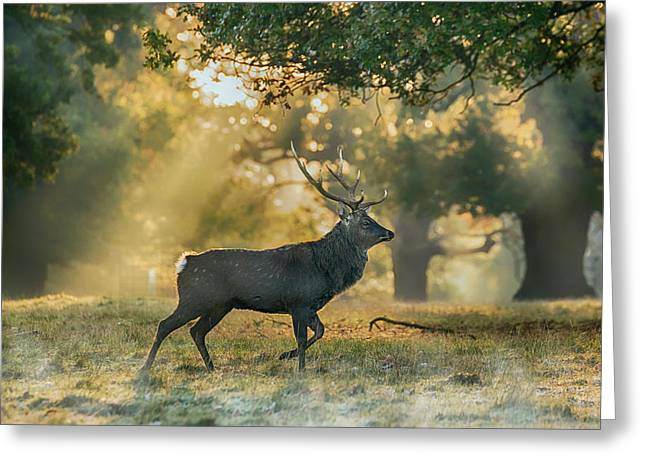 Greeting Card featuring the photograph Misty Walk by Scott Carruthers