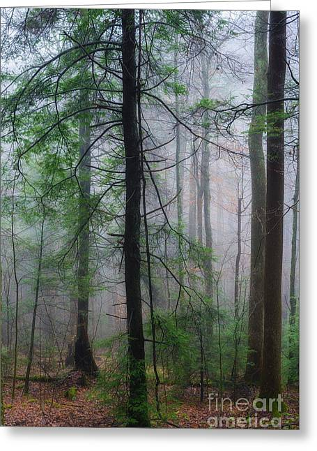Greeting Card featuring the photograph Misty Winter Forest by Thomas R Fletcher