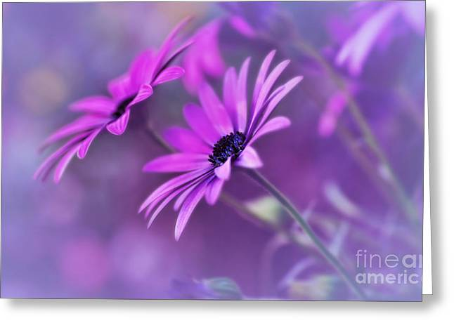 Misty Young Daisies By Kaye Menner Greeting Card