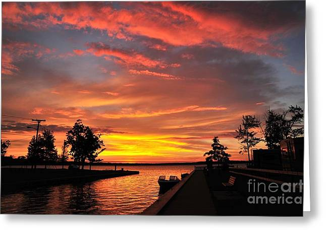 Mitchell State Park Cadillac Michigan Greeting Card
