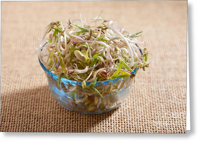 Mix Of Fresh Plant Sprouts Growing In Glass Bowl  Greeting Card