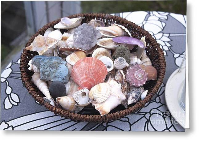 Mix Of Seashells Greeting Card by D R