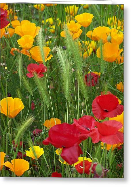 Mixed Poppies Greeting Card by Gene Ritchhart