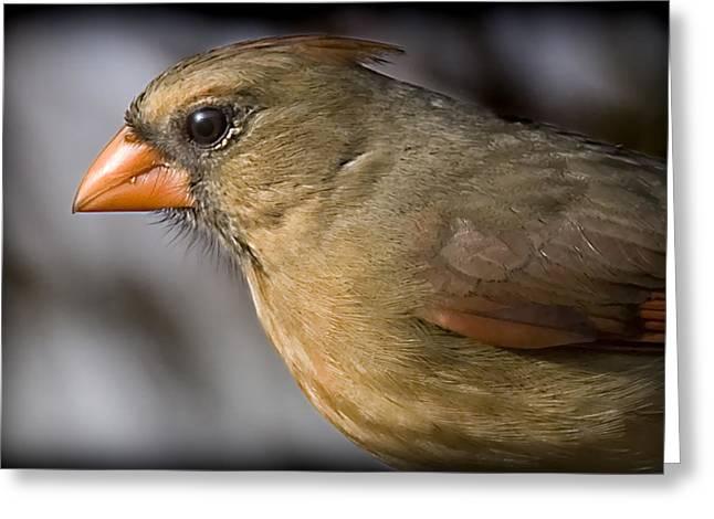 Miz Red Bird Greeting Card