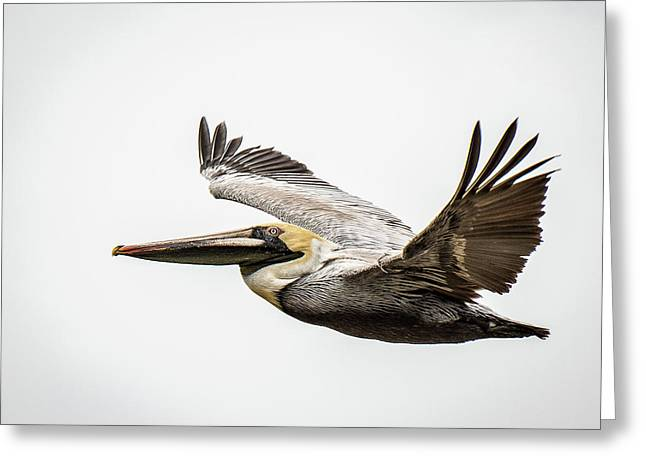 Mobile Bay Pelican Greeting Card