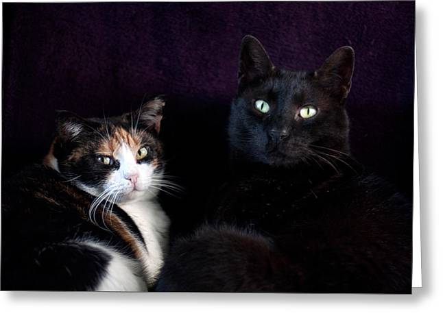 Greeting Card featuring the photograph Mochi And Stinky by Laura Melis