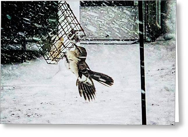Greeting Card featuring the photograph Mockingbird by Donald Paczynski