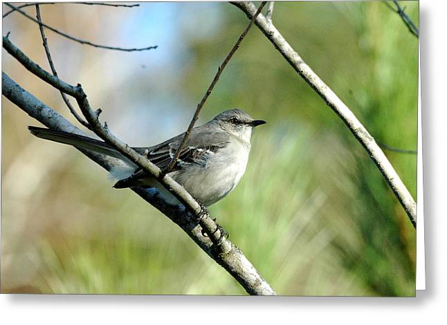 Mockingbird In Green Greeting Card by Teresa Blanton