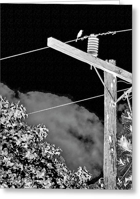 Mockingbird On A Wire Greeting Card