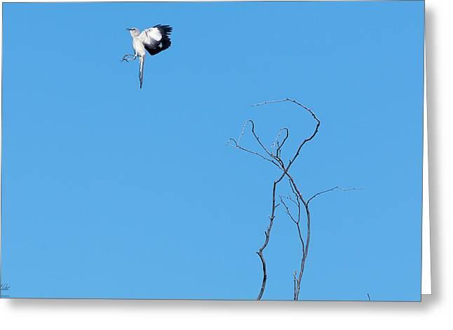 Mockingbird Up Greeting Card