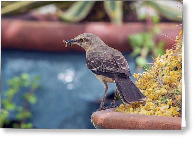 Mockingbird With Bee Greeting Card by Tam Ryan