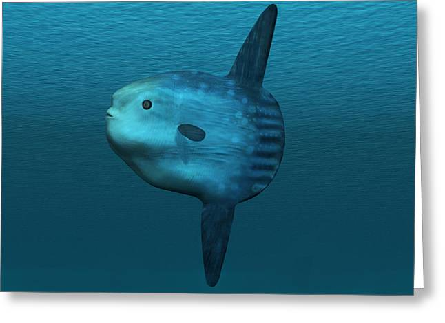 Mola Mola Ocean Sunfish Greeting Card