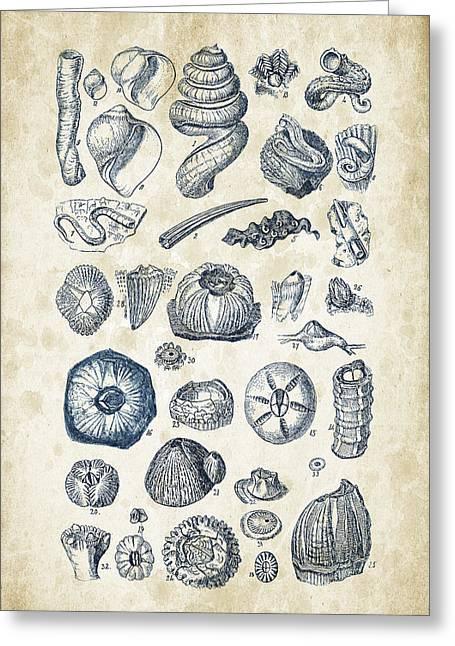 Mollusks - 1842 - 01 Greeting Card