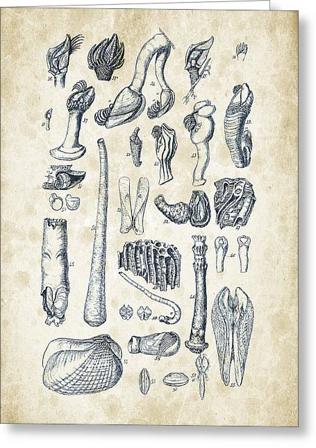 Mollusks - 1842 - 02 Greeting Card by Aged Pixel