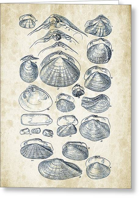 Mollusks - 1842 - 04 Greeting Card by Aged Pixel