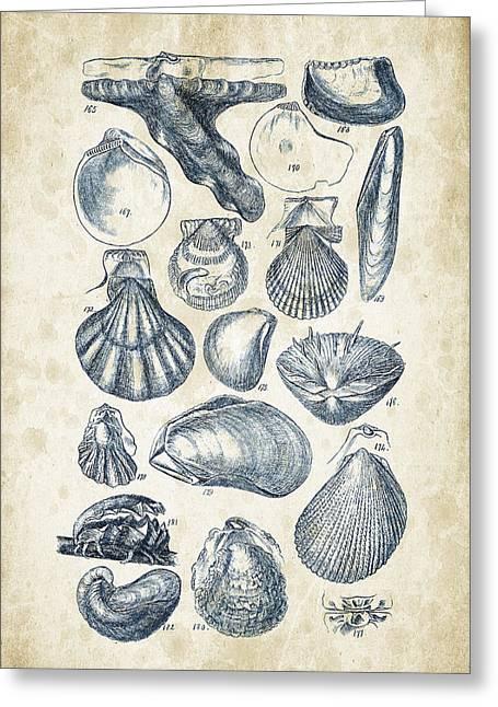 Mollusks - 1842 - 10 Greeting Card