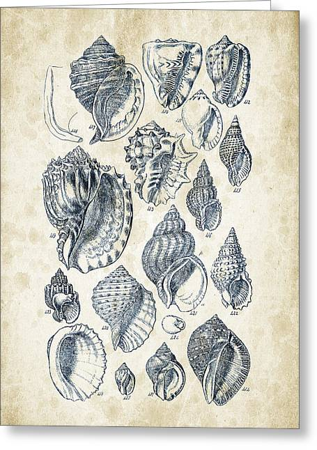 Mollusks - 1842 - 19 Greeting Card by Aged Pixel