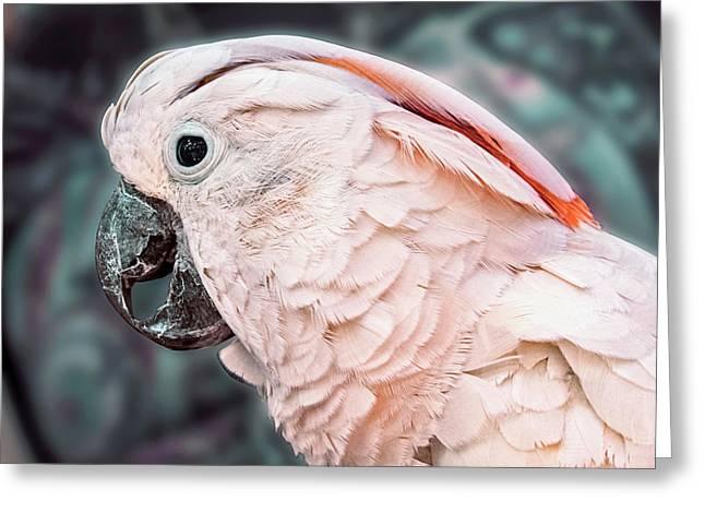 Moluccan Cockatoo Greeting Card by Bob Slitzan