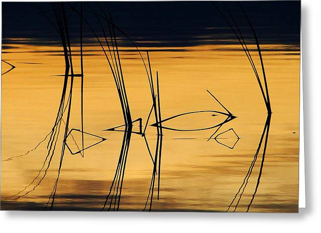 Greeting Card featuring the photograph Momentary Reflection by Blair Wainman
