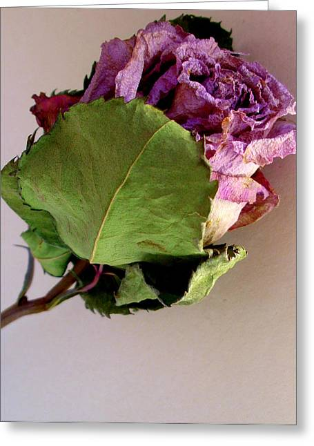 Mom's Rose Greeting Card by Fred Wilson
