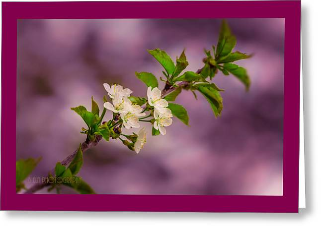 Mon Cherry Greeting Card by Bulik Elena