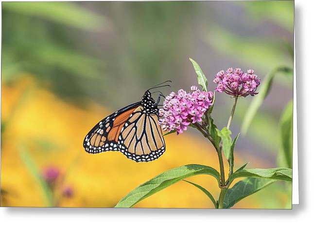 Monarch 2017-12 Greeting Card
