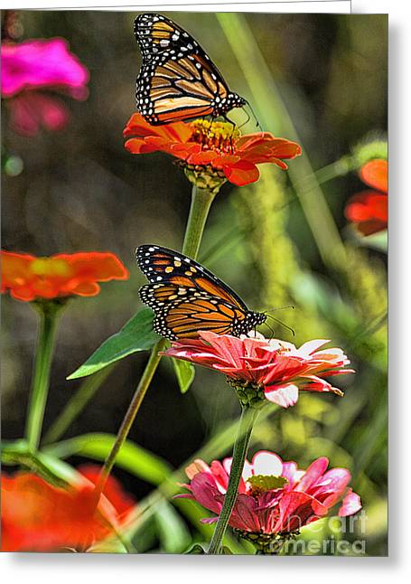Monarch 8 Greeting Card