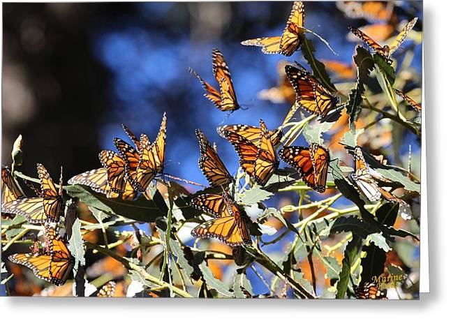 Monarch Active Cluster Greeting Card