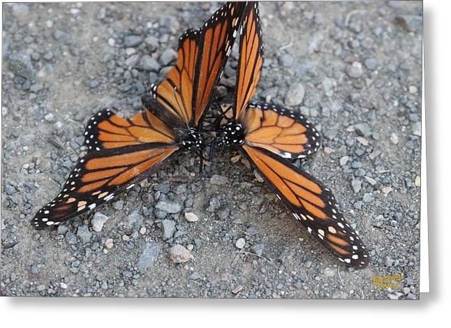 Monarch Afterglow Greeting Card