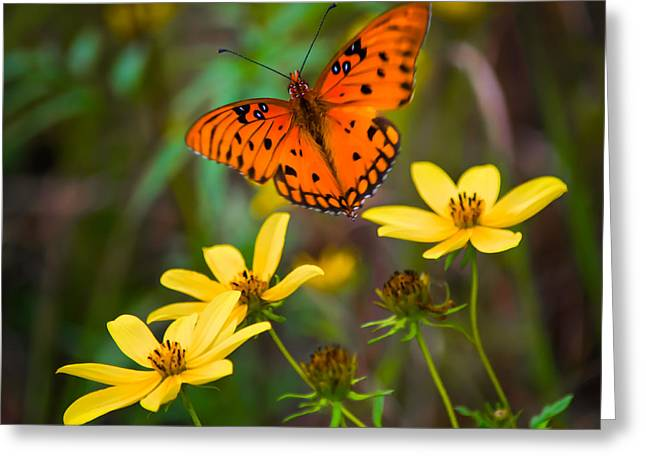 Monarch Among The Daisies Greeting Card
