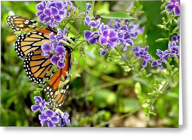 Monarch And Purple Flowers Greeting Card by Rosalie Scanlon