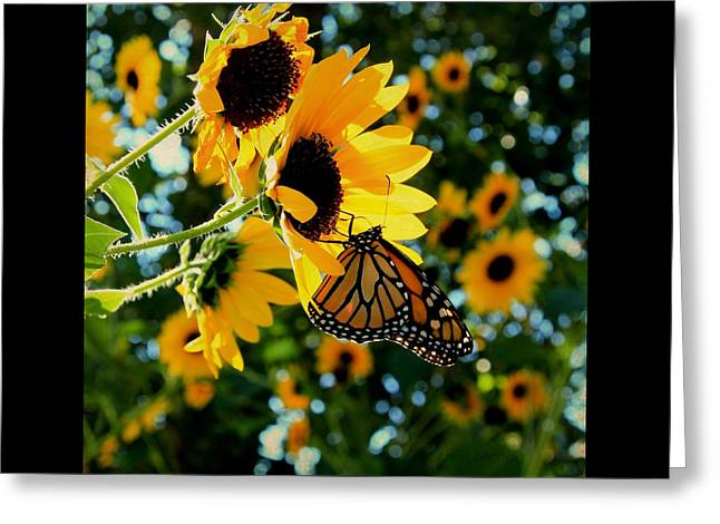 Monarch And Sunflowers Greeting Card by Chris Berry