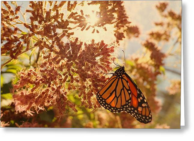 Monarch Beauty Greeting Card by Beth Collins