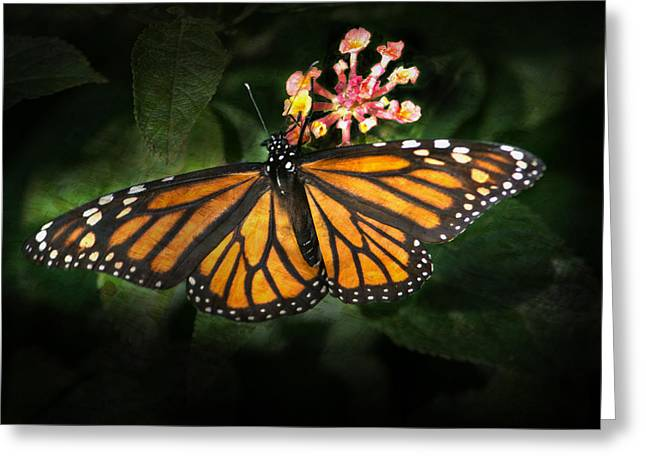 Monarch Butterfly On Lantana Greeting Card
