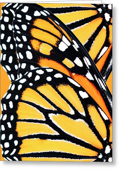 Monarch Butterfly Abstract Pattern Greeting Card