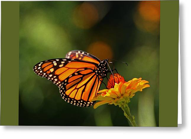 Monarch Butterfly And Zinnias  Greeting Card by Chris Berry