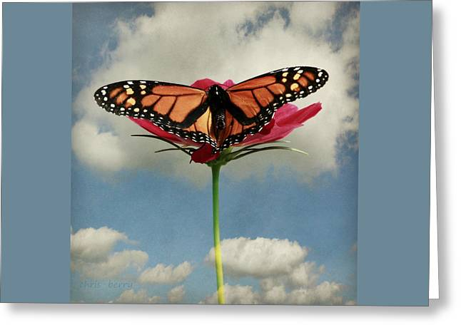 Monarch Butterfly Greeting Card by Chris Berry
