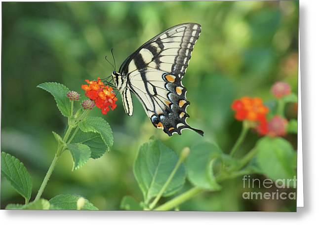Greeting Card featuring the painting Monarch Butterfly by Debra Crank