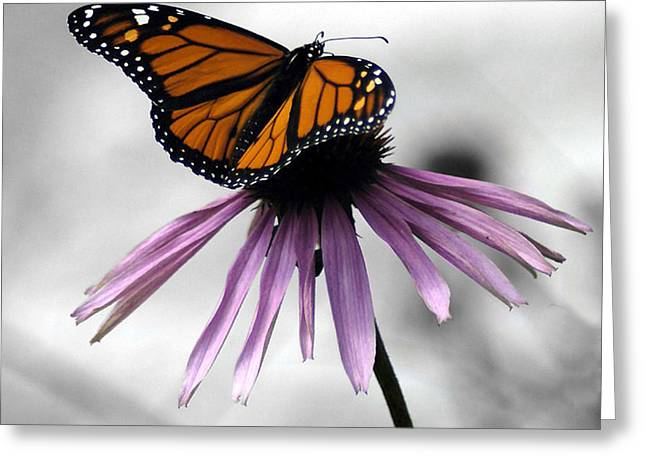 Monarch Butterfly Greeting Card by Evelyn Patrick