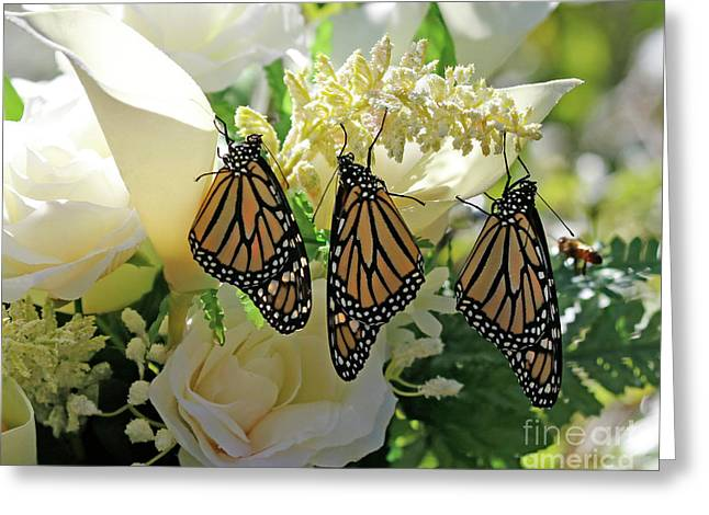 Monarch Butterfly Garden  Greeting Card