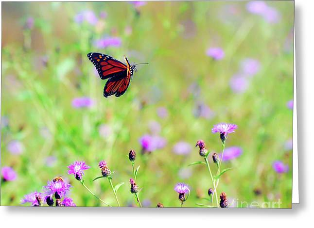 Greeting Card featuring the photograph Monarch Butterfly In Flight Over The Wildflowers by Kerri Farley